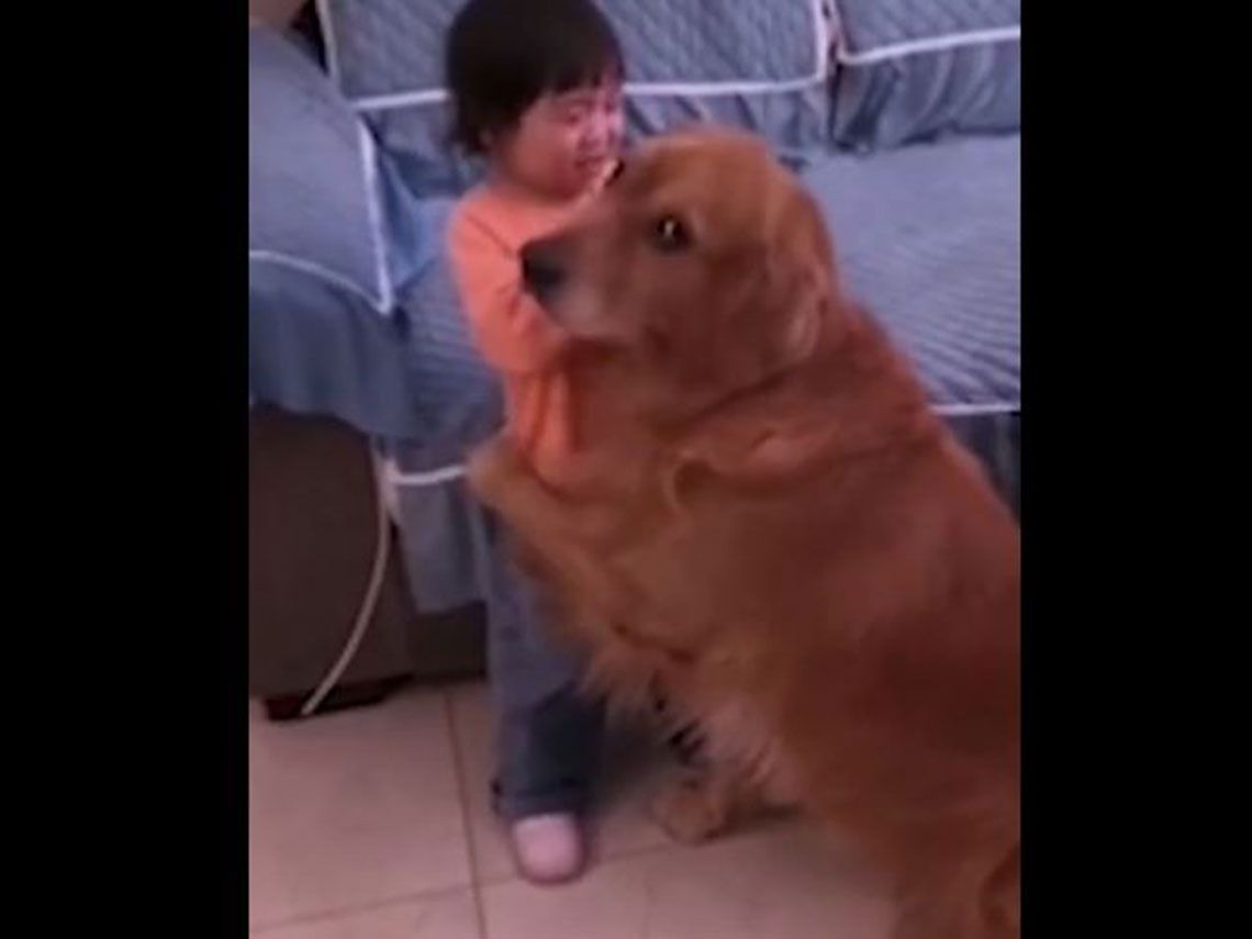perro protegiendo a una niña