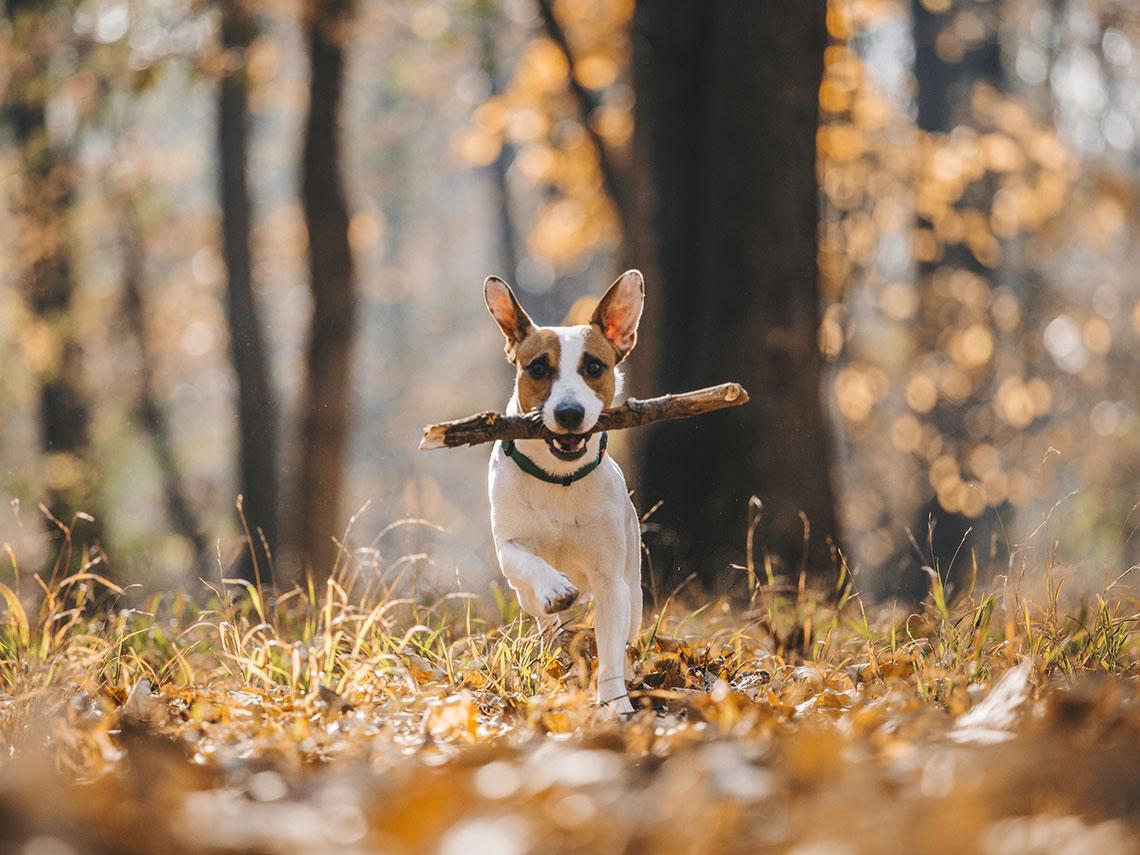perro corriendo por el campo