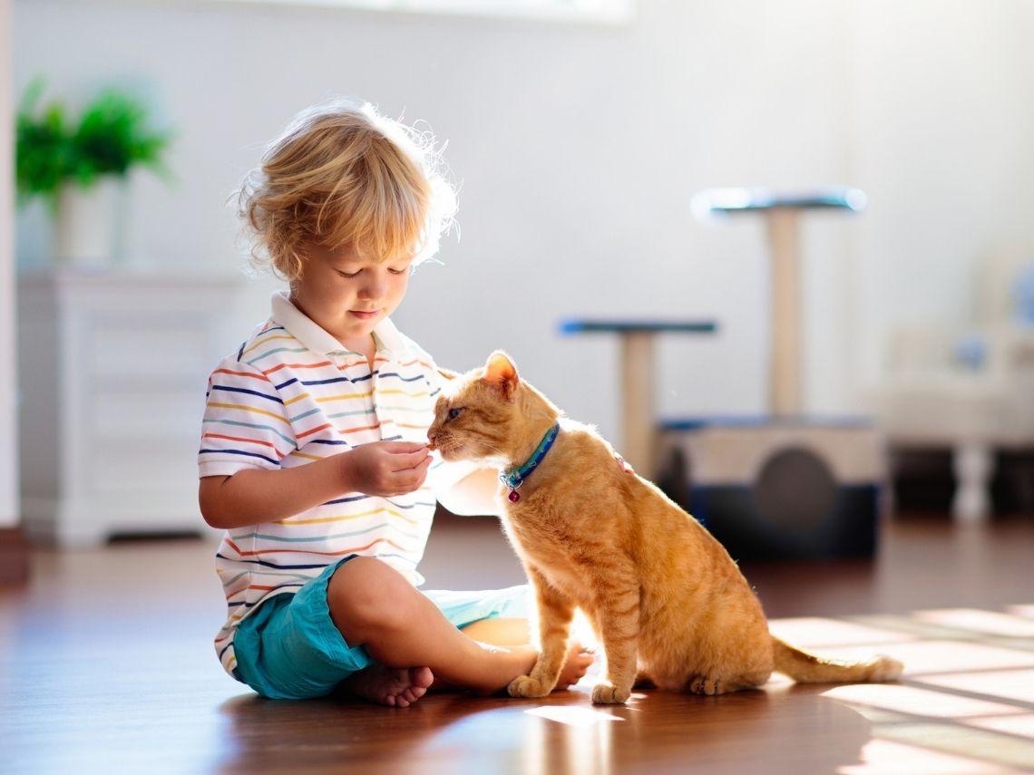Gato comiendo de comedero amarillo