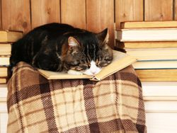 5 álbumes ilustrados con los gatos como protagonistas