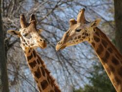 Los mejores zoológicos de España