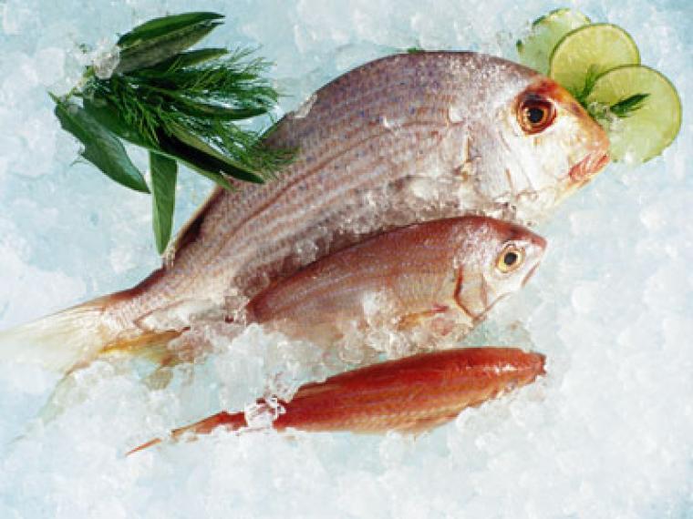 Diferentes tipos de pescado: azul y blanco