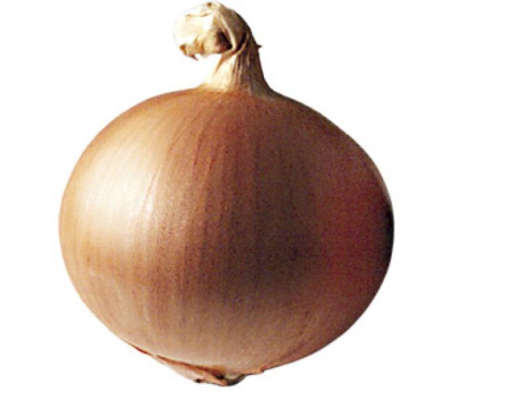 La cebolla, fuente de salud