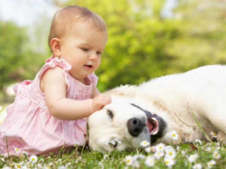 Una mascota para el bebé