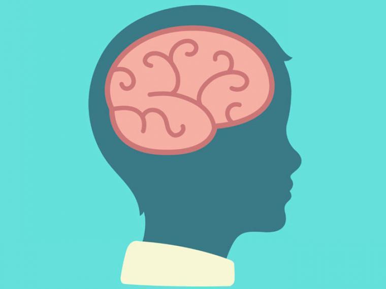 El cerebro de mi hijo: una casa en construcción