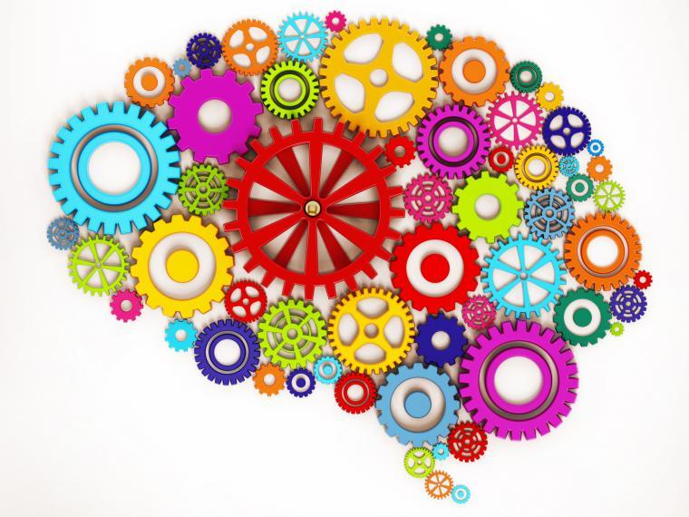 cerebro del niño