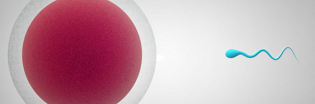 Fecundación in Vitro: ¿qué número de ovocitos son necesarios para garantizar el éxito?